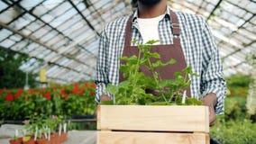 Joyful florist in apron walking in greenhouse holding box of flowers smiling. Joyful African American florist in apron walking in greenhouse holding box of stock video