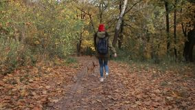 Joyful girl with dog running in autumn park stock footage