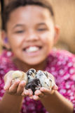 Joyful Kid Holding Pet Chicks Royalty Free Stock Image