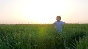 Joyful kid jumps into grass at sunset, happy child running into green field, cute child played outdoors in slow motion, stock footage