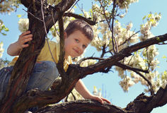 Joyful little boy sitting on blooming tree against blue sky. Active boy climbing on the tree in the park Royalty Free Stock Photography