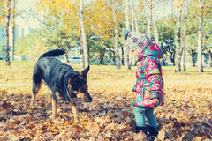 Joyful little girl playing with a big dog Royalty Free Stock Images