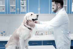 Joyful positive veterinarian looking at the dog Stock Photography