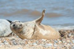Joyful seal on a beach Stock Photo
