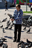 The joyful teenage boy feeds pigeons from hands Stock Images