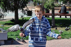 The joyful teenage boy feeds pigeons from hands Royalty Free Stock Image