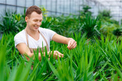 Joyous male florist is busy working Royalty Free Stock Images