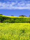 Joys of Spring. Beautiful Mediterranean countryside in Malta during late winter Stock Image