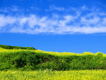 Joys of Spring. Beautiful Mediterranean countryside in Malta during late winter Stock Images