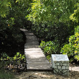 Jozani forest Royalty Free Stock Photo