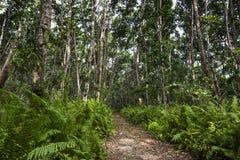 Jozani Forest, Zanzibar, Tanzania Stock Image