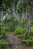 Jozani Forest, Zanzibar, Tanzania Royalty Free Stock Images