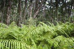 Jozani-Wald, Sansibar, Tansania Stockbilder