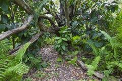 Jozani-Wald, Sansibar, Tansania Stockfotos