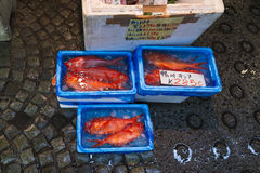 Closeup of fresh red fish at the Tsukiji fish market in Tokyo Japan. Closeup on three styrofoam boxes with blue plastic and bright red fish inside ready for Stock Photos
