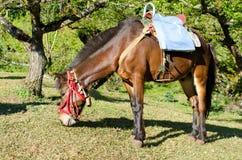 jpg лошади стоковые фото