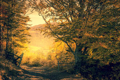 Magic way in Autumn Forest, yellow trees, fall season Stock Image