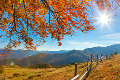 Morning Autumnal Landscape with yellow leaves and sun Royalty Free Stock Image