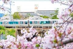 JR pociąg na kolei z Sakura okwitnięcia kwiatu przedpolem Zdjęcia Stock