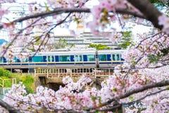 JR pociąg na kolei z Sakura okwitnięcia kwiatu przedpolem Obrazy Royalty Free