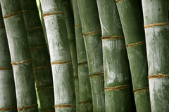 Jätte- bambuskog Arkivfoton