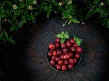 Ju-Li della prugna la frutta è simile alle specie rosse di Luang di divieto Ma il risultato sarà più piccolo immagine stock