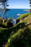 Juan de Fuca Straits con las rosas salvajes en forground y las montañas en distancia foto de archivo