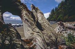 Juan De fuca trail beach Stock Photos