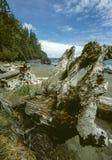 Juan De fuca trail beach Royalty Free Stock Photos