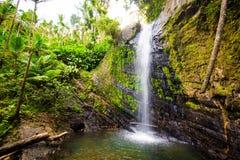 Juan Diego Falls bij het regenwoud Puerto Rico van Gr Yunque stock afbeeldingen