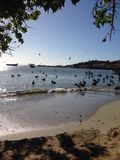 Juan Griego. Sea birds at shore in margarita Royalty Free Stock Images