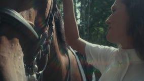 Juba do cavalo A mão da mulher que afaga o cavalo Açaime de um cavalo video estoque