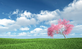 Judas tree on the grass. With Sky Background Stock Images