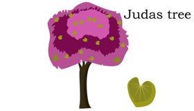 Judaszowych drzew wektoru element wektorowa ikony zieleń ilustracji