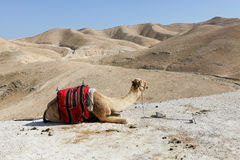 Judea沙漠  库存照片