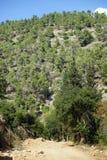 Judea bergnationalpark royaltyfria foton