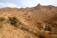 Judea desert mountain landscape. Royalty Free Stock Images