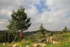 Judea Landscape Stock Image