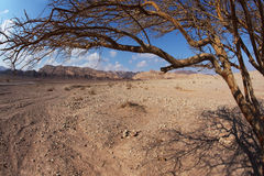 The Judean Desert Stock Photos