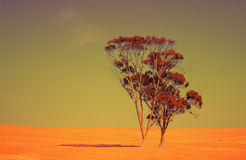 Free Judean Desert Royalty Free Stock Photography - 48951077