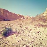 Judean Desert Royalty Free Stock Photos