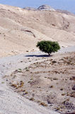 The Judean Desert - Israel Royalty Free Stock Images