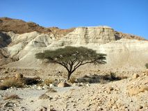 Judean Wüste Lizenzfreies Stockbild