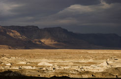 judei dzikiej przyrody Zdjęcia Stock