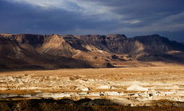 judei dzikiej przyrody Zdjęcie Royalty Free
