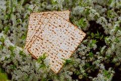 Judendom och klosterbroder på judisk matza på påskhögtidtallit royaltyfria bilder