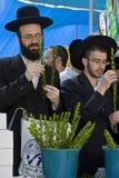 Judeus que preparam-se para o succoth Imagens de Stock Royalty Free
