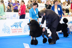 Judge examining dog on the World Dog Show Royalty Free Stock Photography