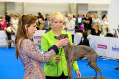 Judge examining dog on the World Dog Show Stock Image