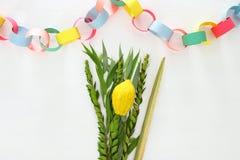 Judisk festival av Sukkot Traditionella symboler & x28; Fyra species&en x29;: Etrog lulav, hadas, arava royaltyfria foton
